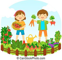 kids in a vegetable garden - two kids picking vegetables in...