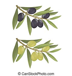Olive branches with green and black olives