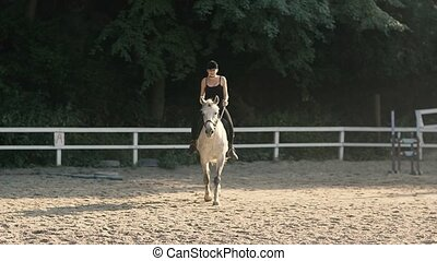Graceful Horse. Horse Riding in the Summer Forest - Horse...