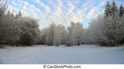 Panorama of winter forest Frosty trees - Panorama of winter...