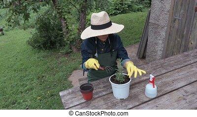 Female gardener with pots near table