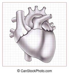Medical Organ Template - Medical organ template with human...
