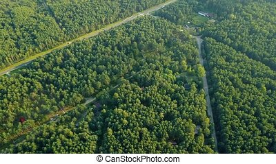 Roads in green woods - Aerial shot of crossed road and...