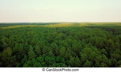 Panorama of green woods - Drone panoramic view of surface of...