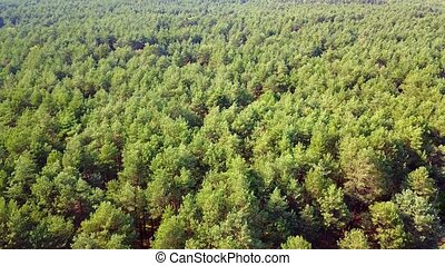 Green woods with coniferous trees - Aerial panoramic view of...
