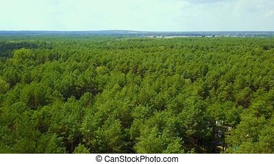 Evergreen trees in woods - Aerial drone panoramic view of...
