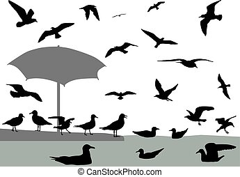 Gulls - Silhouettes of gulls flying and floating on water