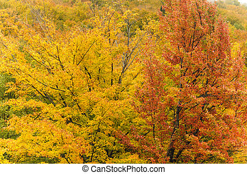 Trees in yellow and orange