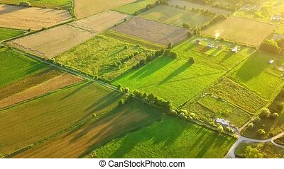 Green terraces from air - Drone view of spacious plantation...