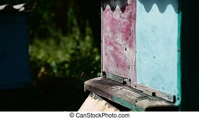 Bee flying in front of a beehive - Bee flying in front of a...