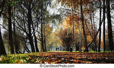 People walk along a path in autumn park in the distance