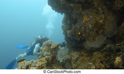 Scuba diver on the coral reefs - A full shot of a scuba...