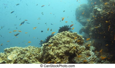 Purple fish and coral reef underwater
