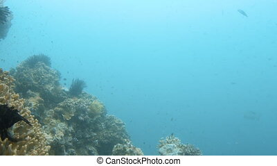 Ocean and coral reefs and fishes
