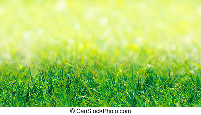 Green Grass Border With Defocused Natural Background at...