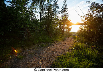 Footpath Lit With Tealight Candles In Forest - Footpath lit...