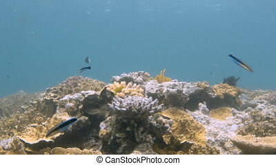 Coral reef and long fish - A medium shot of coral reef and...