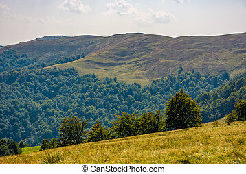 beech forest on grassy hillside in autumn - beech forest on...