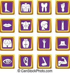 Body parts icons set purple - Body parts icons set in purple...