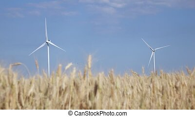 Two rotating windmill in a field of ripening young wheat -...