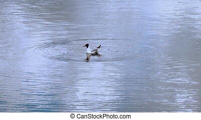 Gull bird on sea