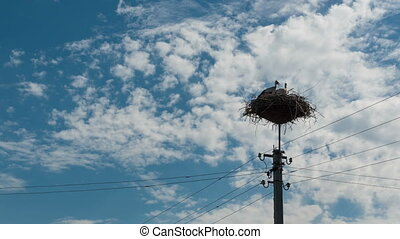 Storks Sitting in a Nest on a Pillar and Moving Clouds in a...