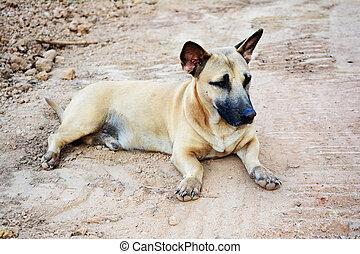 brown dog lie down on ground