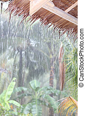 Tropical rain in jungle - Tropical rain shower gushing down...
