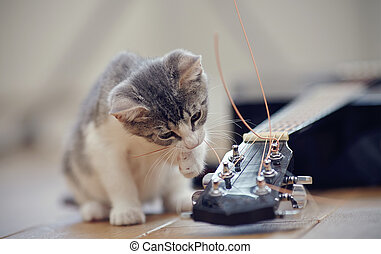 The kitten plays with a guitar string. - The curious kitten...