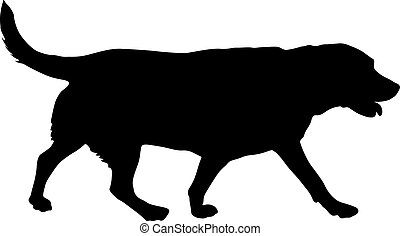 Labrador dog silhouette on a white background