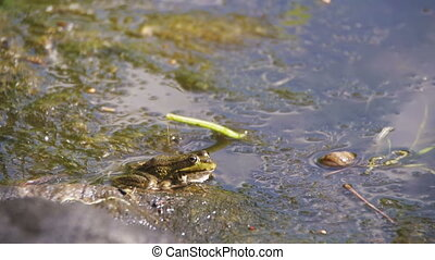 The Child Caught a Green Frog by the River. Slow Motion in...