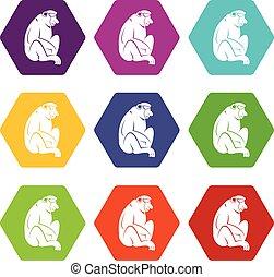 Orangutan icon set color hexahedron - Orangutan icon set...