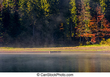 fog on the lake in autumnal forest. lovely background with...