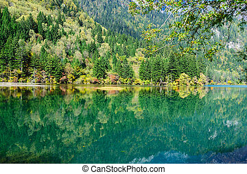 Forest and lake landscape of China jiuzhaigou - Forest and...