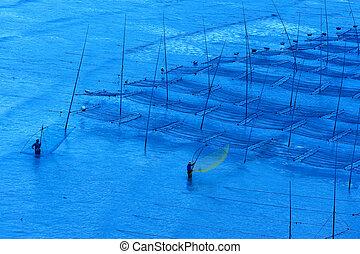 rybacy, pracujący, wodorost, zagroda