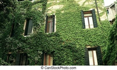Overgrown ancient buildings in Venice, Italy - Overgrown...