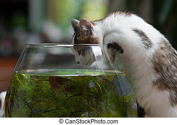 cute young kitten and a fish bowl - cute young kitten...