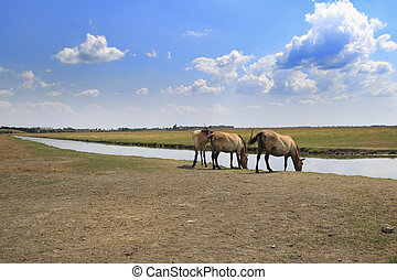 Horses At Watering Place - Three Przewalski's horses at...