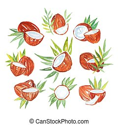 Coconuts with palm leaves set of watercolor vector Illustrations