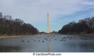 Washington Monument with Geese in the Lake u2013 Time Lapse