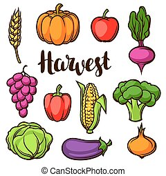 Harvest set of fruits and vegetables. Autumn seasonal illustration