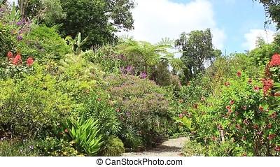 tropical garden - green tropical garden with trees and...