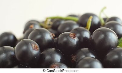 Freshly picked black currant berries. - Close-up of berries...