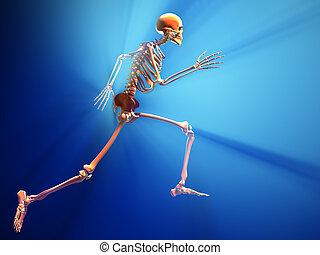 Human skeleton - this is a 3d render illustration