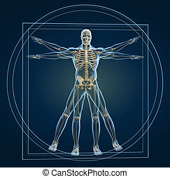 Skeleton in vitruvian - Body and skeleton in vitruvian man -...