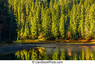 spruce forest with lake at sunrise - spruce forest with lake...