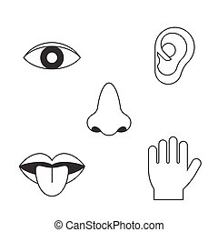 five senses icon, outline design with name, sight, hear,...