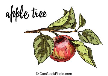 Ripe red apple on a branch with leaves isolated on white background. Vector Illustration