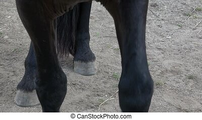 Horse's hoof on the ground. Close up of horse hooves on the...