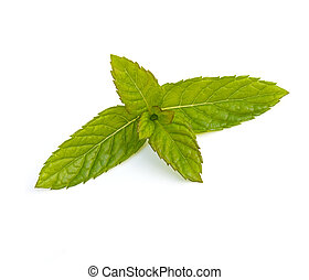 Spearmint Leaves - Spearmint leaves Mentha spicata isolated...